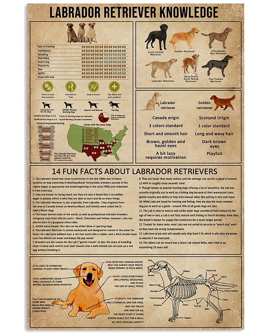 Labrador Retriever Knowledge Shirts Apparel Posters Are Available At Ateefad Outfits Store Labrador Retriever Labrador Retriever