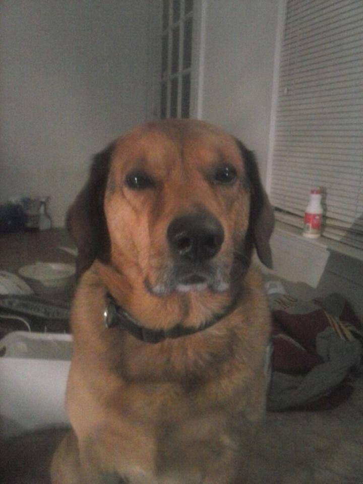 Lost Found Pets Of The Triangle Nc Liked March 6 Wake