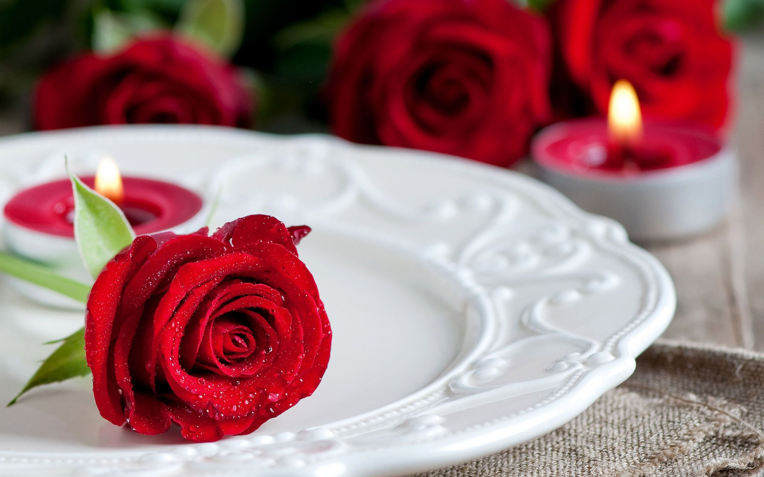 Hd wallpaper red rose - Red Rose On A Plate Flower Hd Wallpaper X