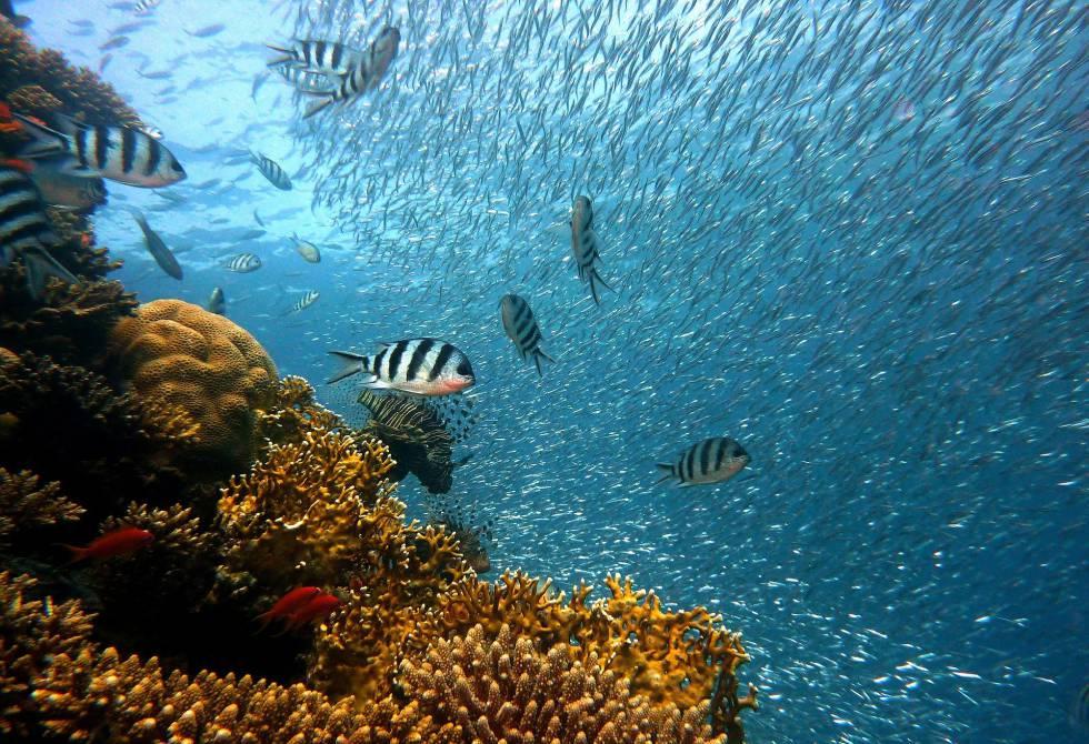 Fondos De Pantalla Horizontal Mar Búsqueda De Google Ocean Diorama Underwater World Salt Water Fishing