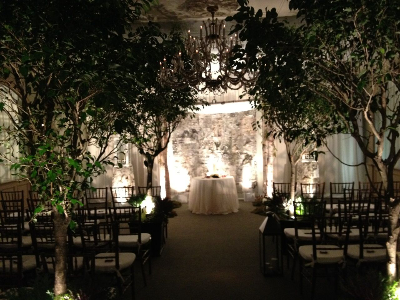 live trees lighting natural birch wall and a birch wood chuppah