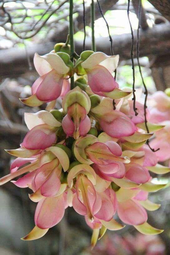 Unusual flowering trees