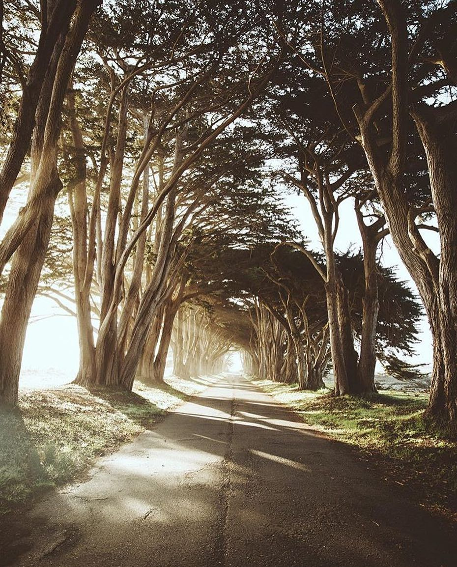 sunrise at Cypress Tree Tunnel by @samuelelkins # ...