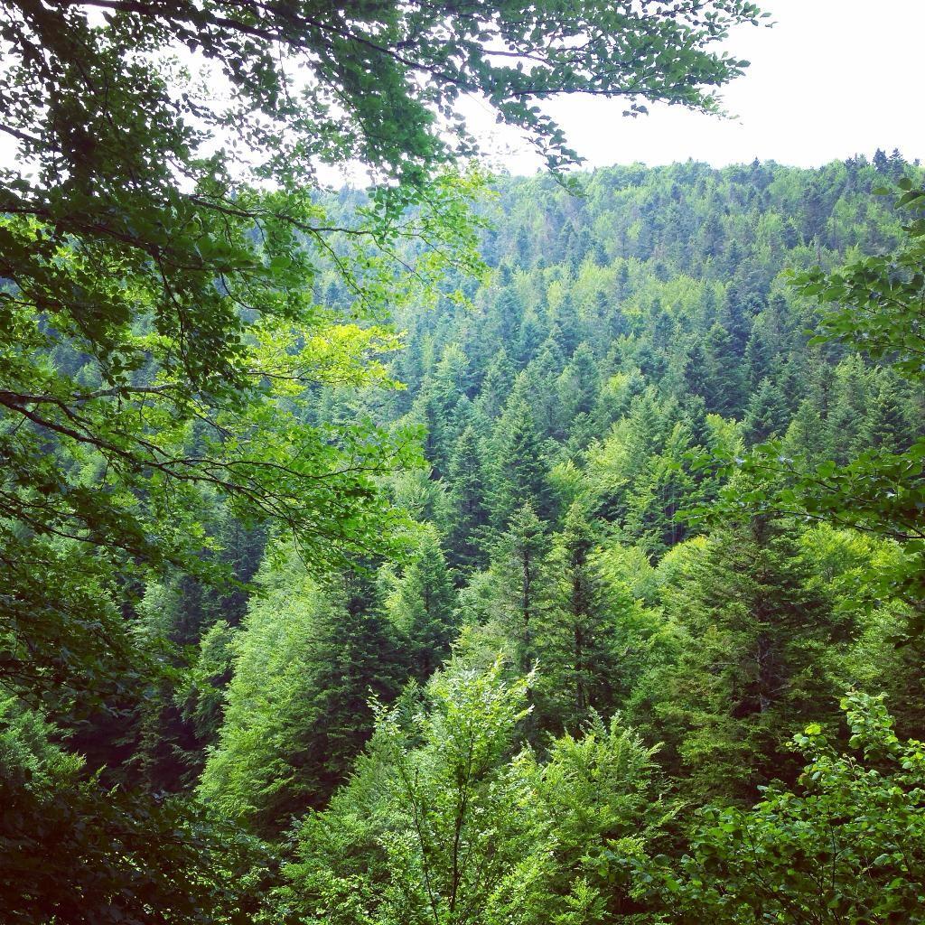 Selva de Irati - Navarra - Opiniones de Selva de Irati - TripAdvisor
