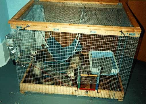 Homemade Ferret Cages Ferret Cage Pet Ferret Ferret