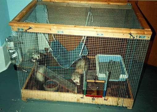 Homemade Ferret Cages Ferret Cage Pet Ferret Ferret