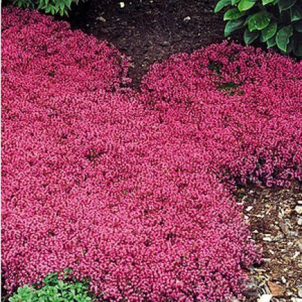 Bodendecker Gegen Unkraut Garten Bepflanzen Pflanzen Und