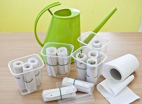 Посев в бумажные рулоны 👍 Если у вас возникают проблемы с ...