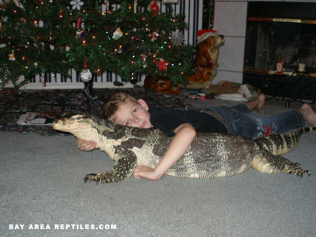 Asian Water Monitor Animals Pinterest Kid Lol And