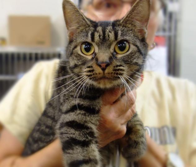 I found Tiny Tot 35638608 on Cat adoption, Cute animals