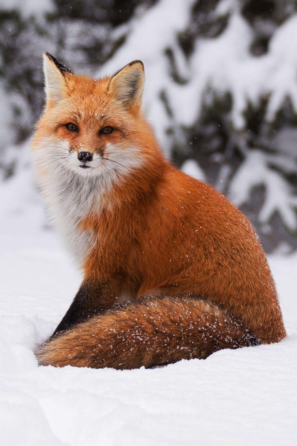New Post On Travel Story Fuchs Haustier Niedliche Tiere Susseste Haustiere