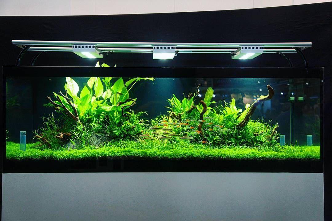 Charmant Aquaflora Display Planted Aquarium At Interzoo With Black Background.