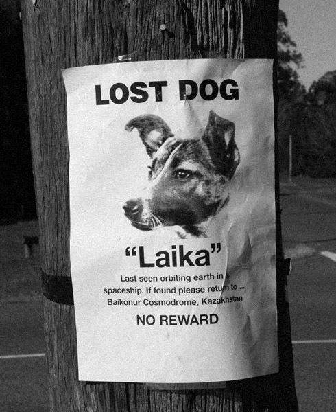 Lost Pet Signs Losing A Dog Losing A Pet Funny Signs