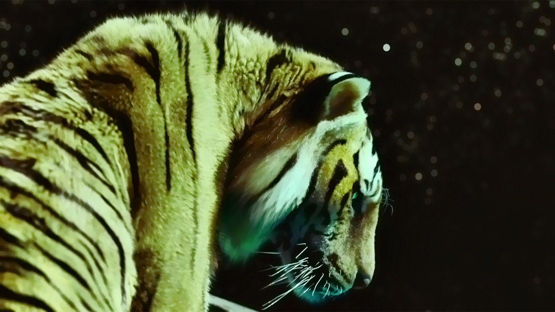 Films tigres de papier peint la vie Pi | 1920x1080 | 252 330 | WallpaperUP