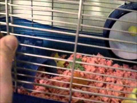 Pet Smart Hamster Haul - http://www.doggietalent.com/posts/pet-smart-hamster-haul/