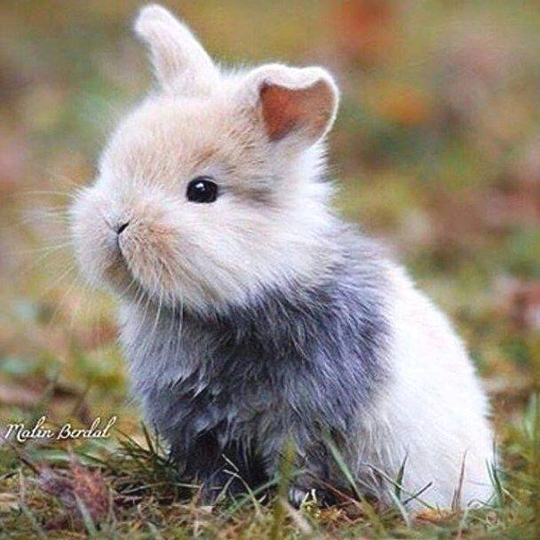 милые картинки зайцев нет съемок