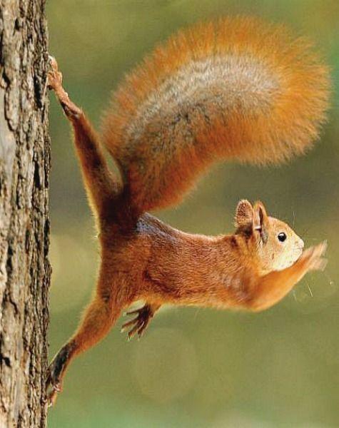 My Misty Morning Cute Squirrel Animals Animals Wild