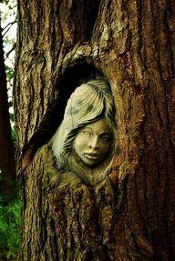 Lady in tree!