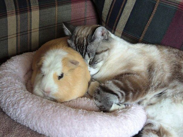 This lady who never misses her afternoon nap with her buddy. | 31 Cats Who Will Make Your Day A Little Brighter
