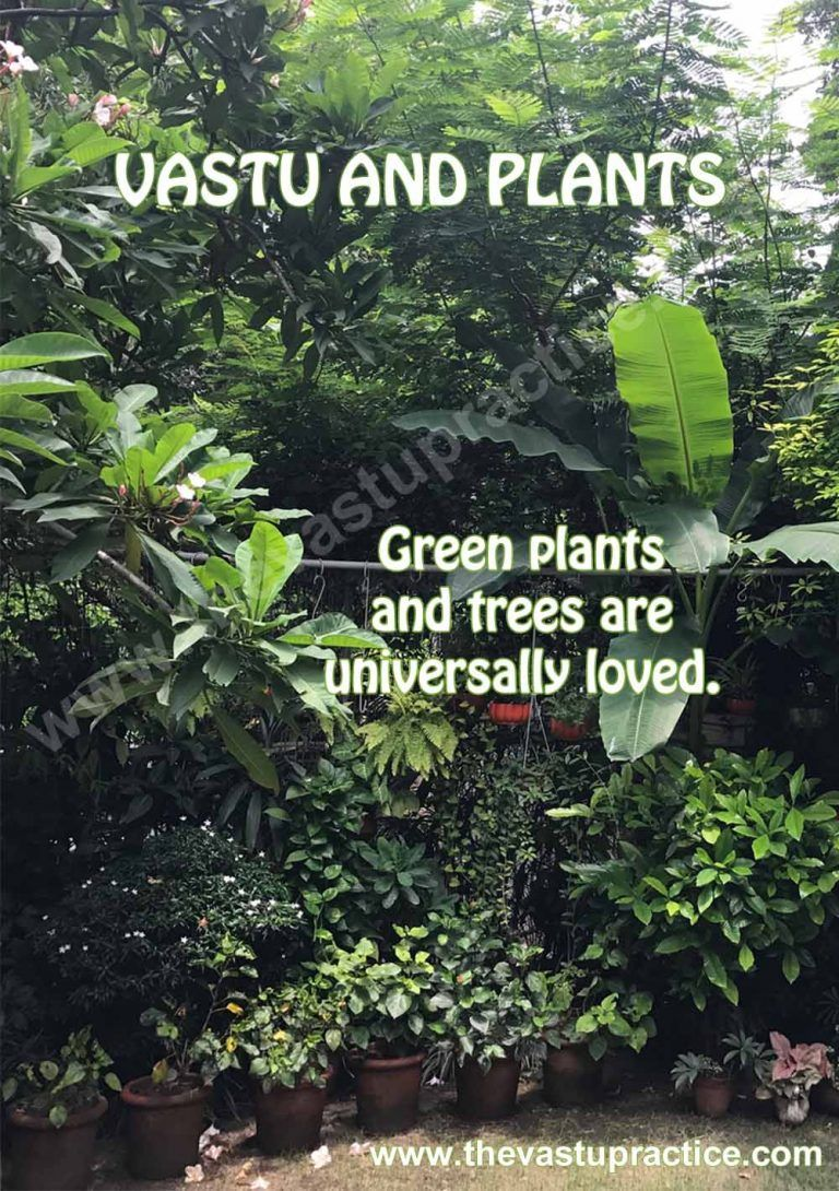 Vastu And Plants Plants Vastu Shastra Vastu for garden