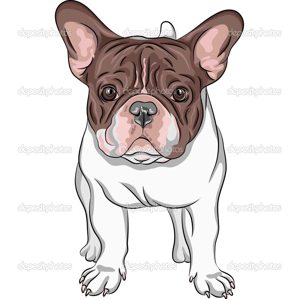 bulldog francês desenho - Pesquisa Google