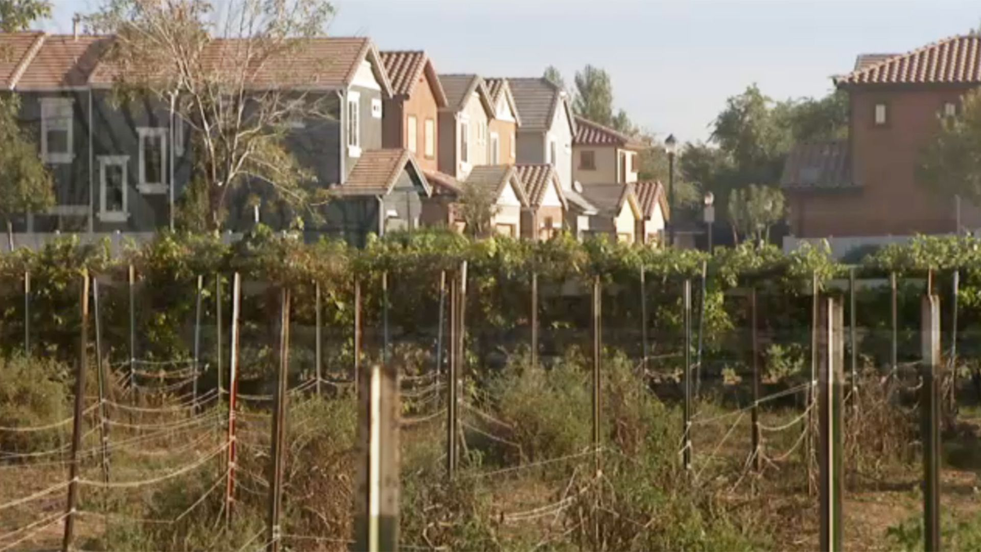Agritopia How Farm To Table Living Is Taking Root In Suburban Phoenix Living Table Suburban Farm