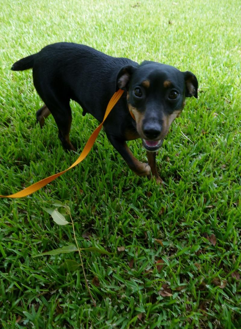 Adopt Babs On Rescue Dogs Animals Dog Cat