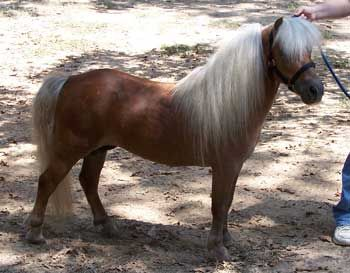 I had a dream last night that I had a mini horse. I've decided that one day, I will have a pet mini horse. I'll name him Mr. Muffins.