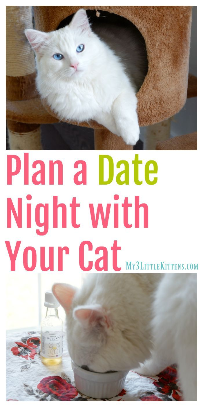 Plan A Date Night With Your Cat My 3 Little Kittens Cat Training Cats Cat Training Scratching