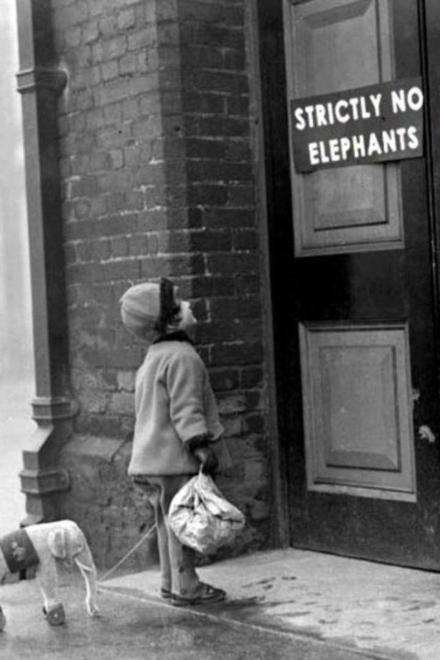 Inga elefanter