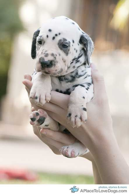 Put Me Down A Place To Love Dogs Cute Dogs Puppies And Kitties Animals Beautiful
