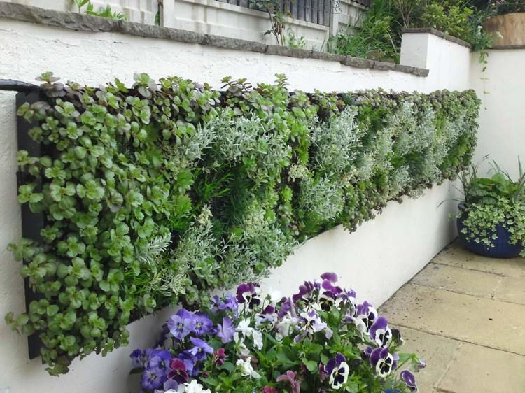 Mur v g tal conseils et photos inspirantes pour le cr er for Creer mur vegetal