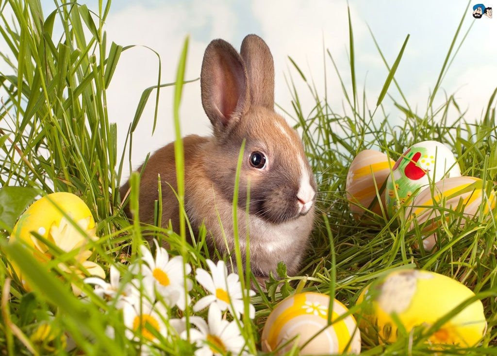 Easter Wallpapers And Backgrounds Easter Wallpaper Happy Easter Wallpaper Easter Bunny