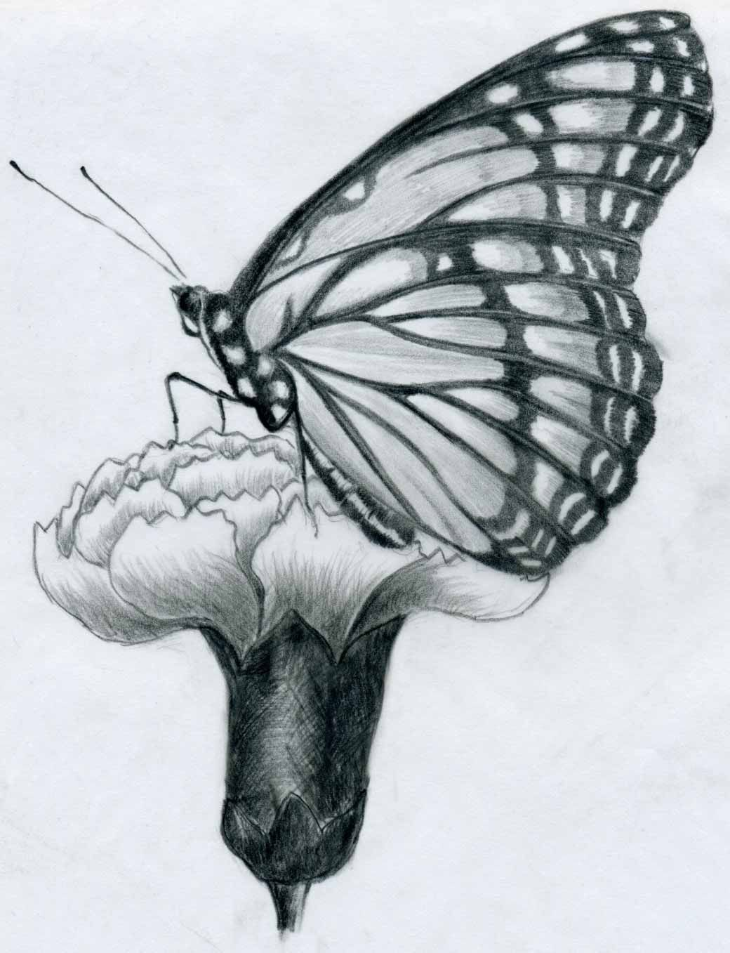 drawing pictures Flower sketches, Easy butterfly drawing