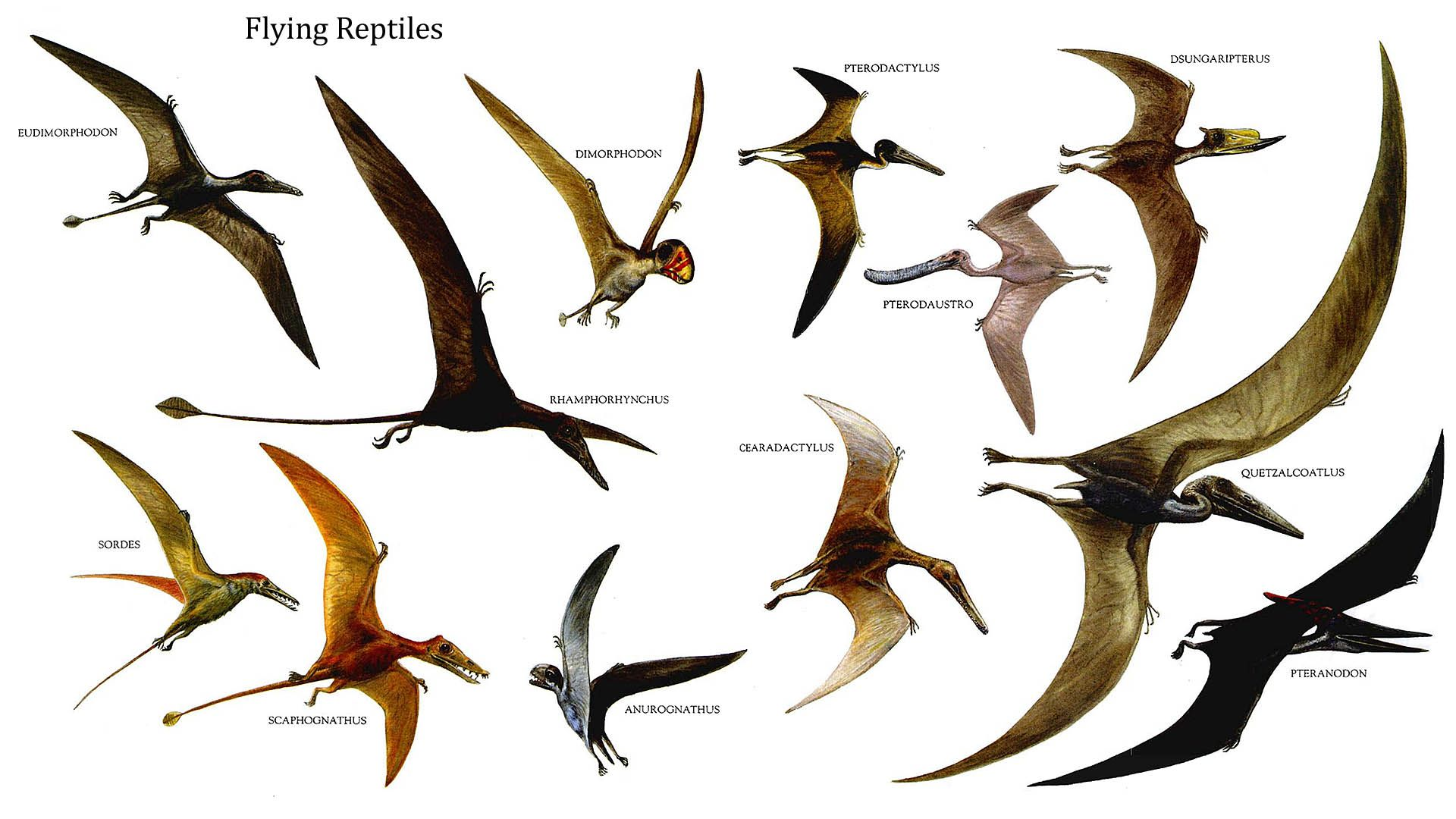 Reptiles bird flying dinosaurs wallpaper background