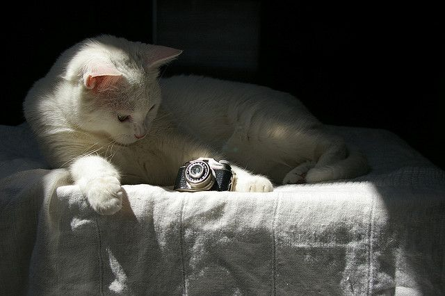 Cat with Vintage Miniature Camera    Digital photograph of beautiful white  cat with Vintage Arrow miniature camera.