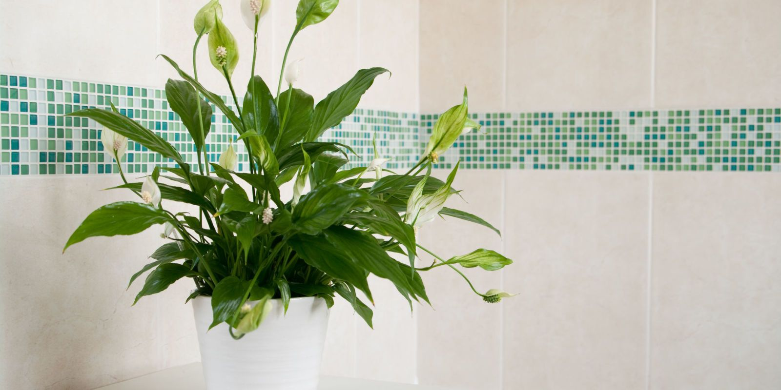 These Bathroom Plants Will Help You Create Your Own Indoor Oasis Shower Plant Air Cleaning Plants