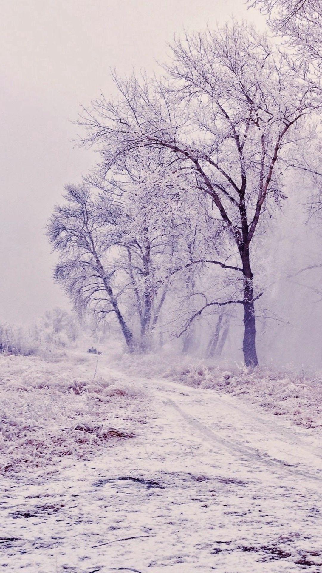 Wallpaper iphone winter - Winter Path Trees Landscape Iphone 6 Wallpaper