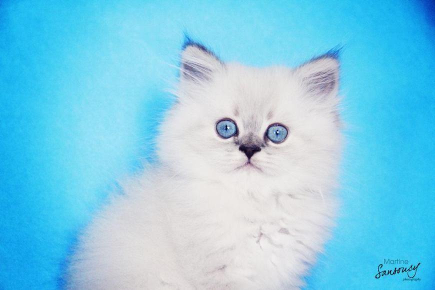 Pet Photography tips & tutorial!!  http://msansoucy.wordpress.com http://facebook.com/saskatoonphotography