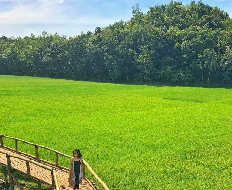 Terpopuler 30 Gambar Pemandangan Gunung Yg Indah 10 Sawah Indah Yang Membuatmu Makin Cinta Dengan Indonesia Download Di 2020 Pemandangan Gambar Galaxy Wallpaper