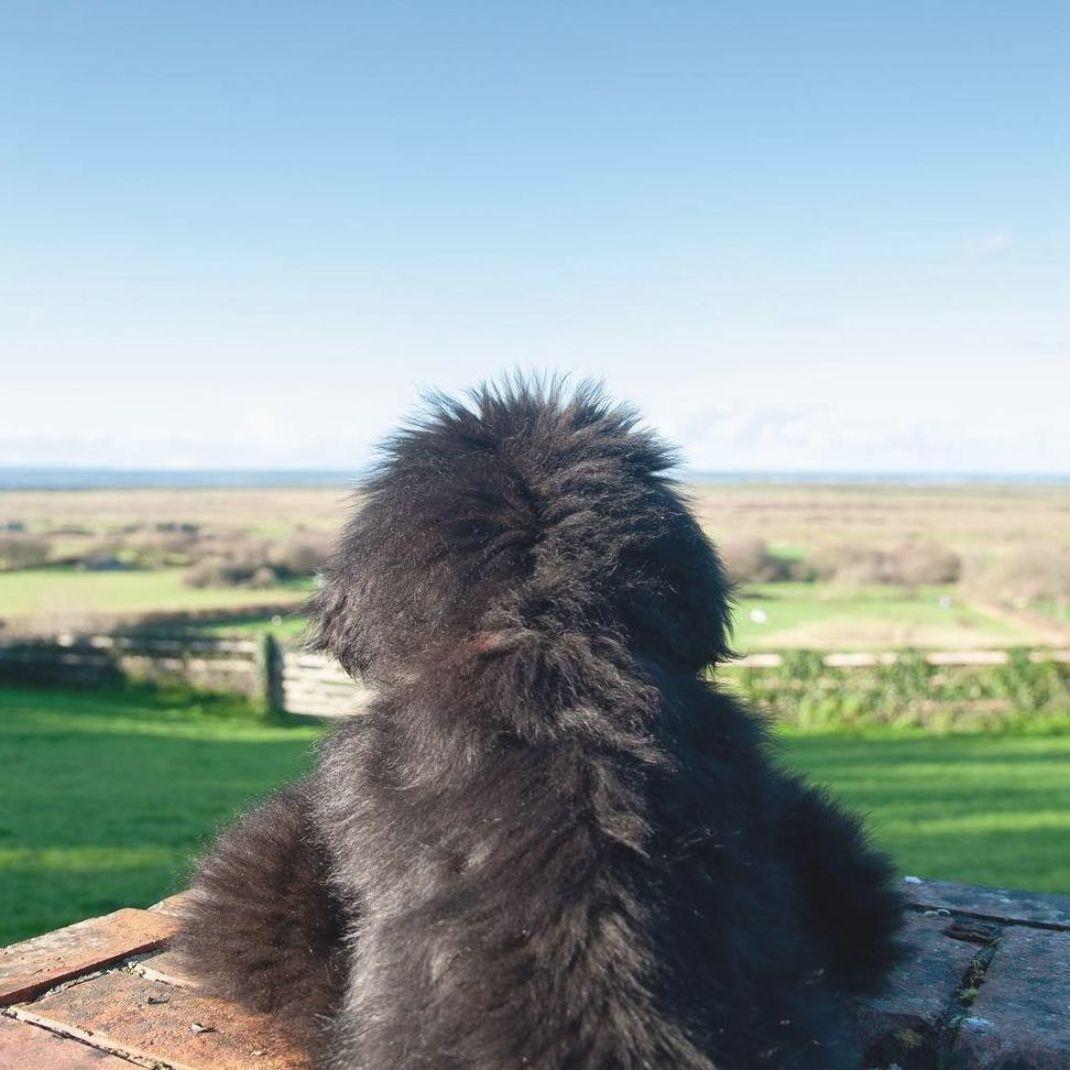Pin Na Doshci Newfoundland Dogs