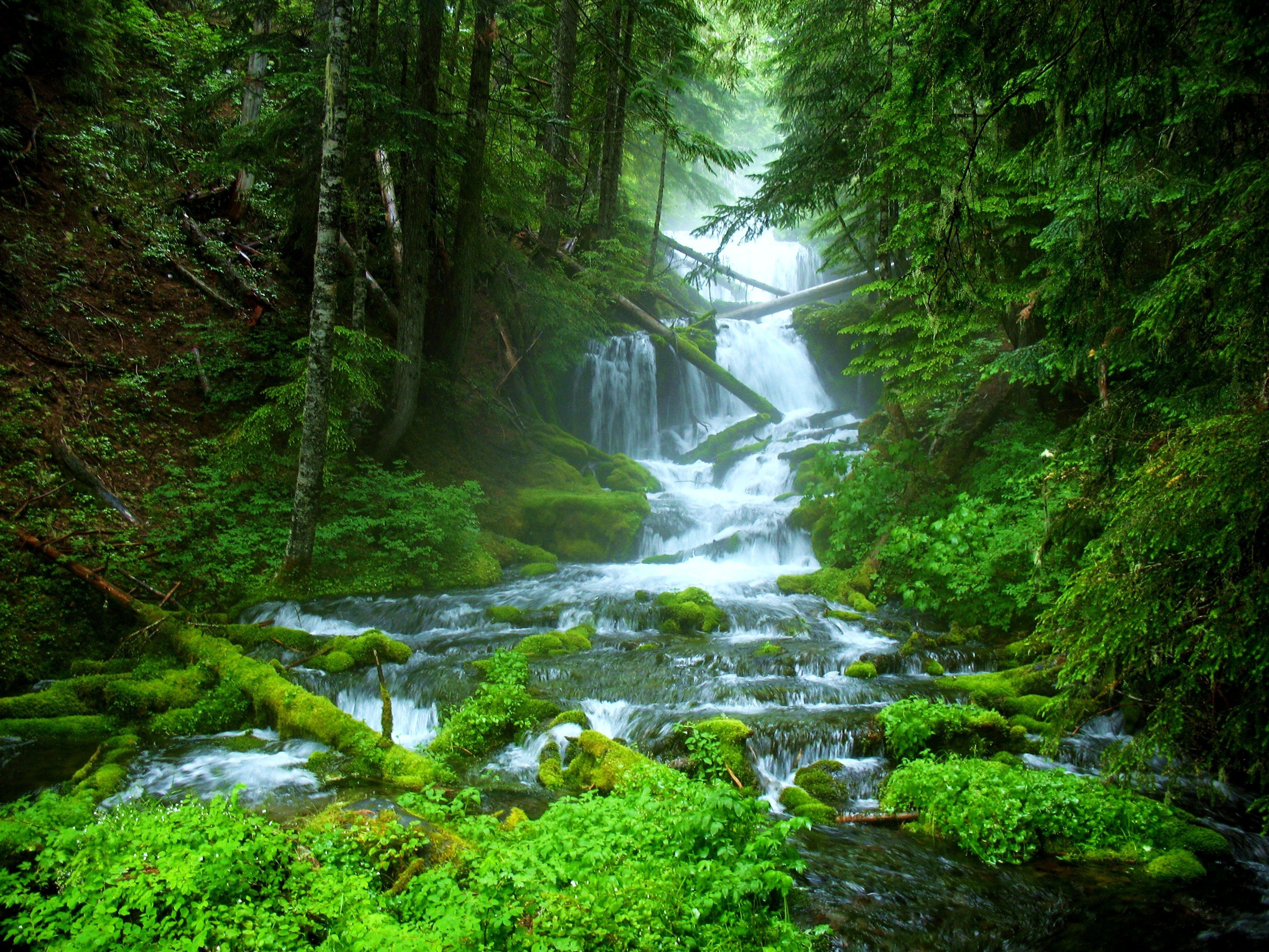 Of Stream Beautiful Forest Green Nature Water Waterfall Wallpaper Green Nature Wallpaper Green Nature Forest Waterfall