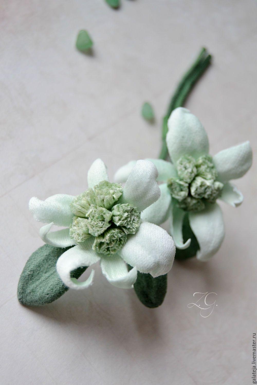 Купить цветы эдельвейсы заказ каталога цветоводство