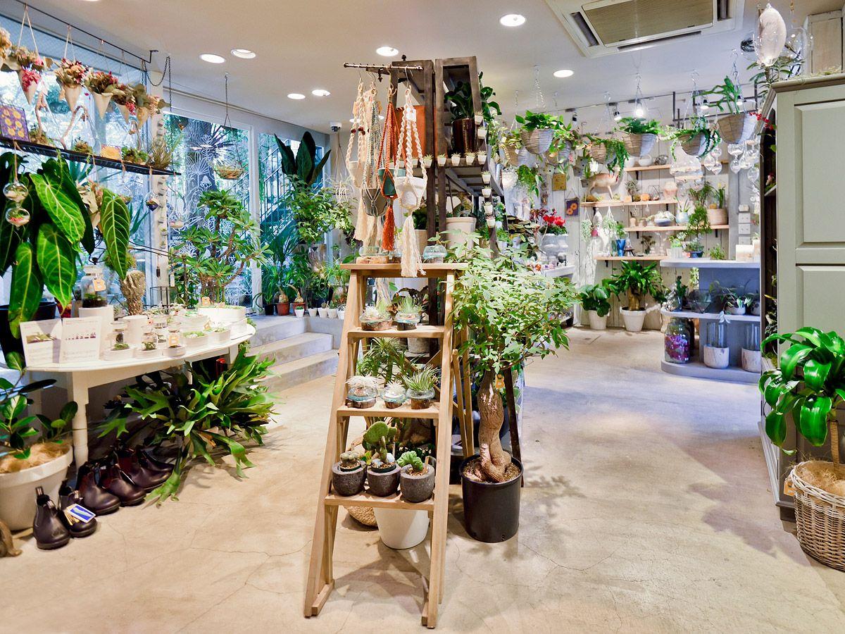 Shop Solso Architectual Plant Farm Flower Shop Flower Store