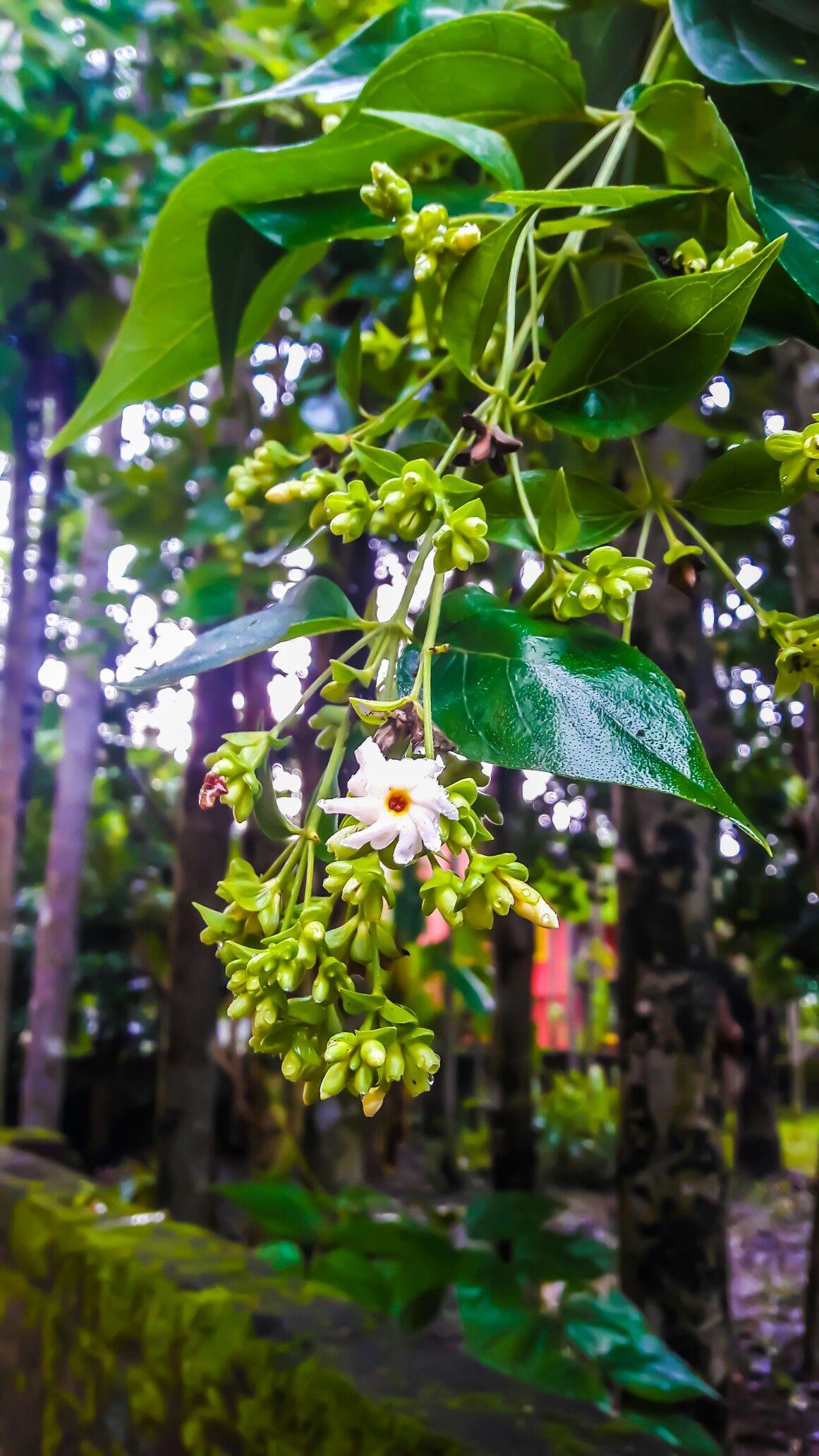 Image By Sudeshna Mondal On Amature Photography Plant Leaves