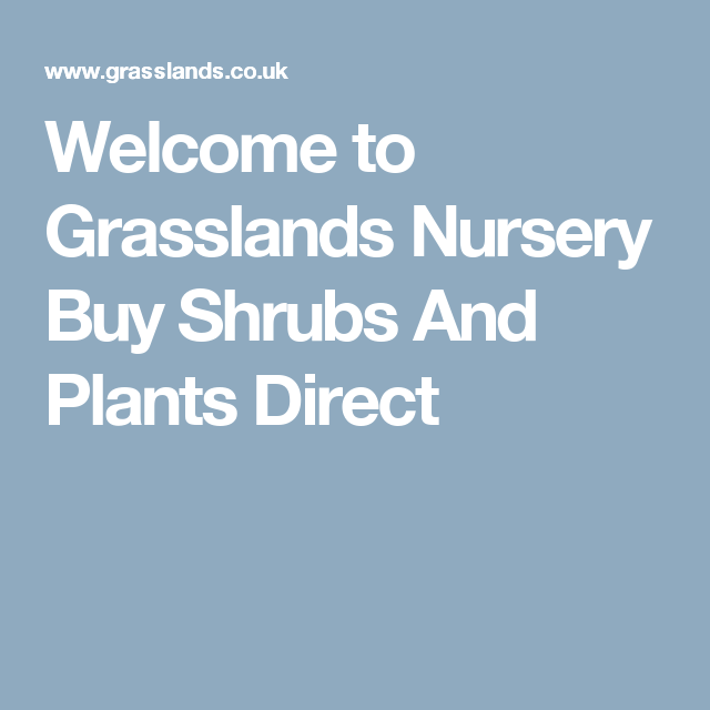Welcome To Grlands Nursery Shrubs And Plants Direct