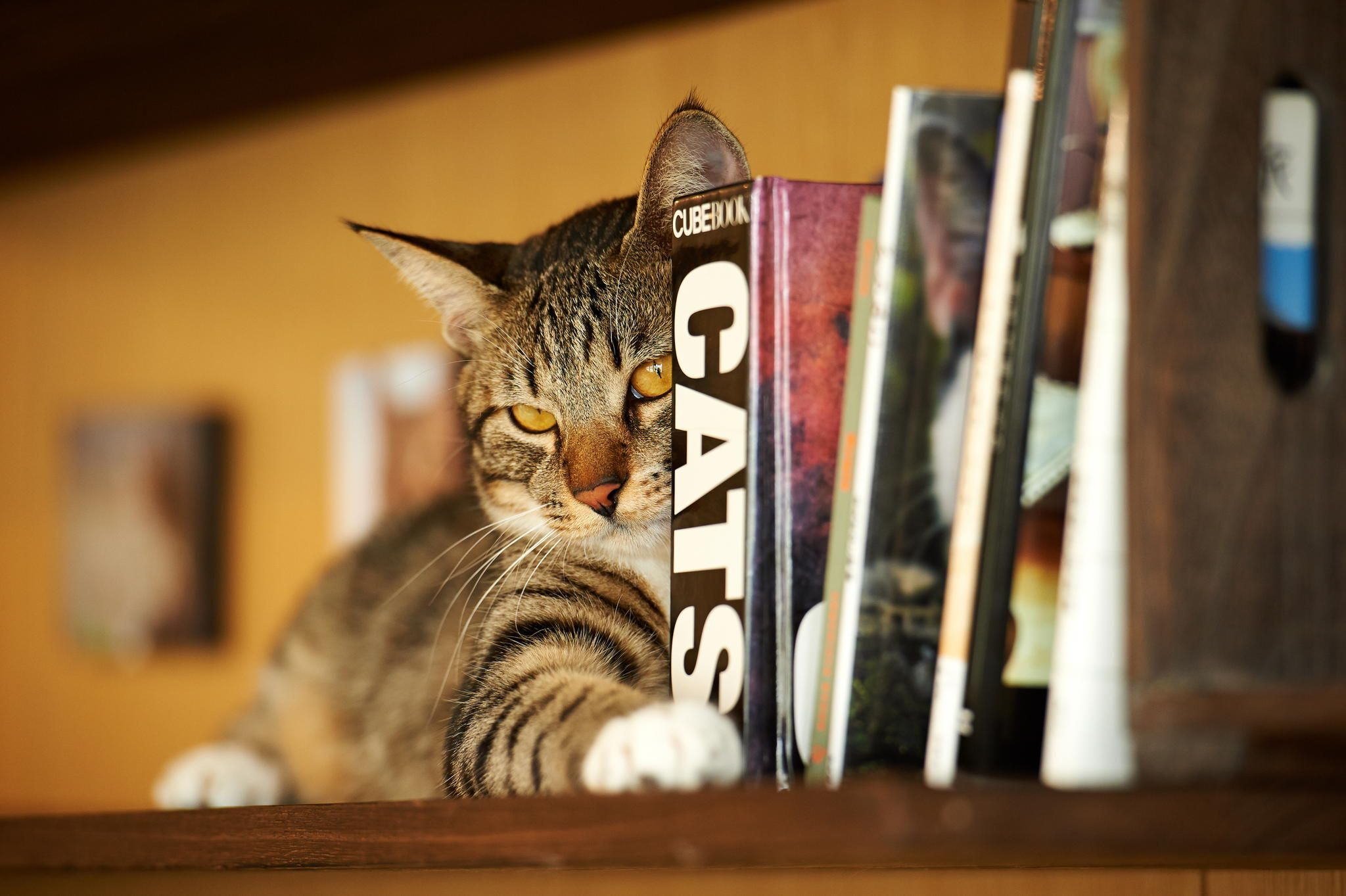 "* * "" I agree to beez a book end az long as yoo keeps dis one here ands dont's move it."""
