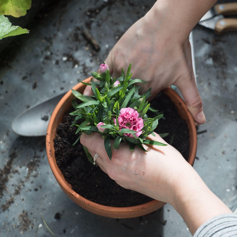 Retrouvez le plaisir de jardiner, même en ville ! Grâce à