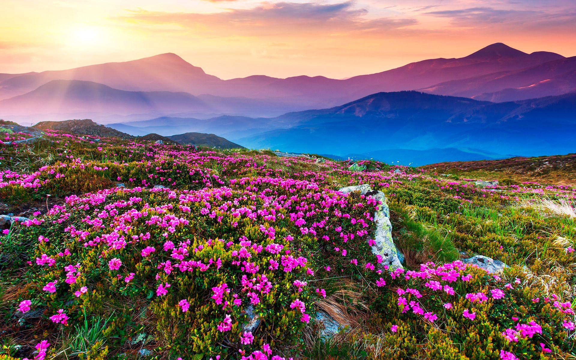 Лето картинки природа мира