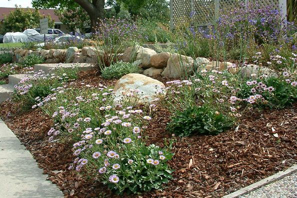 Cal nativenatural garden with basalt boulders and erigeron